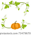 Pumpkin vine on a white background. 73479670