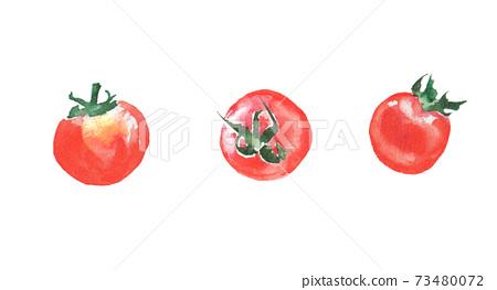 水彩畫的迷你番茄的插圖 73480072