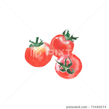 Illustration of cherry tomatoes drawn in watercolor 73480074
