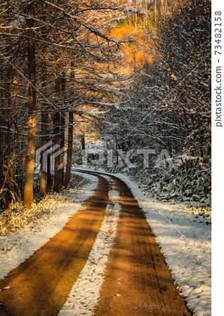 北海道美瑛町的黃葉,雪山路 73482158