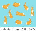 兔子姿勢 73482672