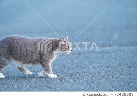 貓過馬路 73486905
