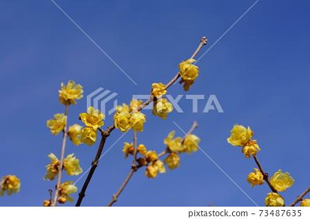 1 월 후츄 196 소신로우바이 · 받침 꽃과 · 로우 바이의 소경 · 후츄 향토의 숲 박물관 73487635