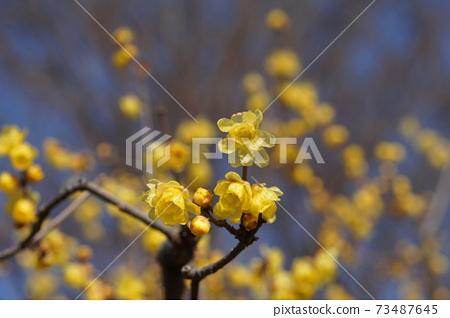 1 월 후츄 189 소신로우바이 · 받침 꽃과 · 로우 바이의 소경 · 후츄 향토의 숲 박물관 73487645