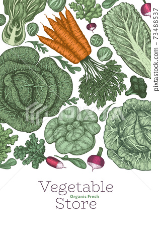Hand drawn vintage color vegetables design. Organic fresh food vector banner template. Retro vegetable background. Traditional botanical illustrations. 73488537
