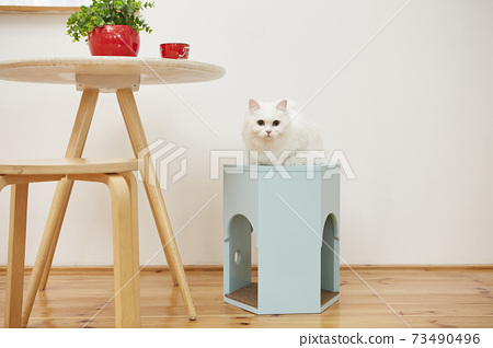 土耳其Siangora貓 73490496