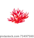Vector illustration of red coral 73497560