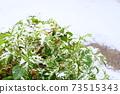 눈을 쓰는 녹색 식물 73515343
