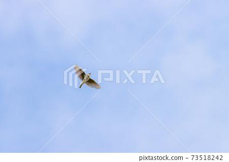 Lark singing in the sky 73518242