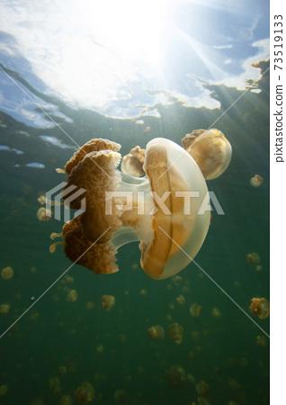 水母湖 73519133
