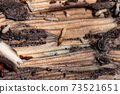 Termites 73521651