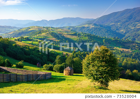 mountainous rural area in the morning. beautiful remote agricultural landscape in summer. trees and grassy fields on rolling hills 73528004