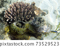The wonderful coral reef in Togian islands 73529523