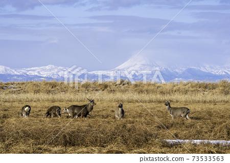 濕地和山脈,藍天和鹿群 73533563