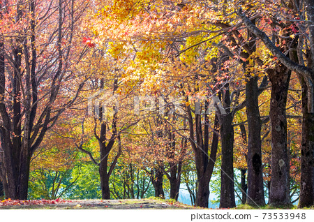 森林的秋天彩色圖像(平山高原) 73533948