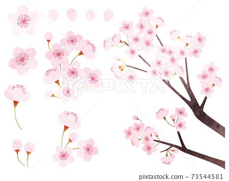 各種櫻花的水彩風格素材插圖 73544581