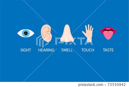Human senses icon. Vector illustration, flat design. 73550942