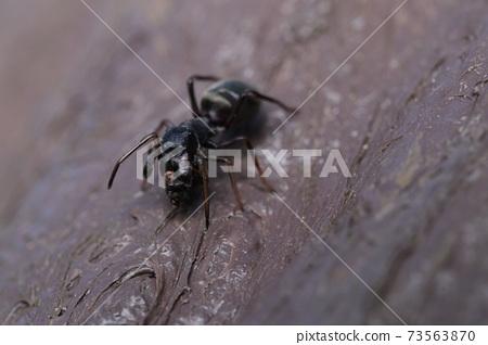 阿里蜘蛛吃東西 73563870