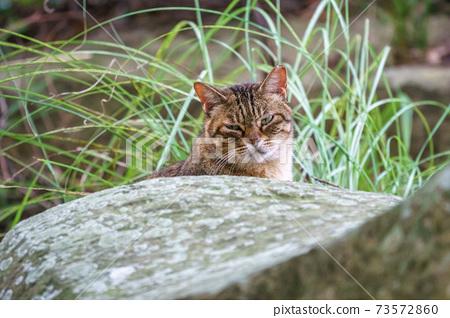 流浪貓的肖像 73572860