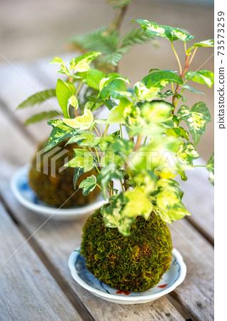 青苔盆景日式圖像 73573259