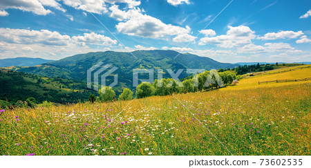 rural landscape with blooming grassy meadow. beautiful nature scenery of carpathian mountains on a sunny day. fluffy clouds on the blue sky 73602535