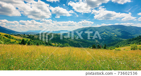 rural landscape with blooming grassy meadow. beautiful nature scenery of carpathian mountains on a sunny day. fluffy clouds on the blue sky 73602536