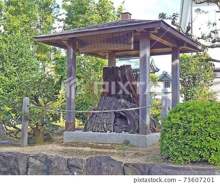 義經坐松大Tai神社 73607201