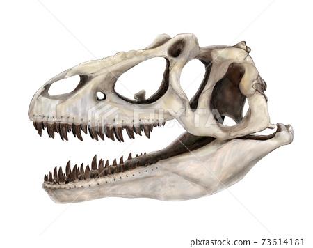 侏羅紀晚期恐龍Arosaurus頭骨圖 73614181