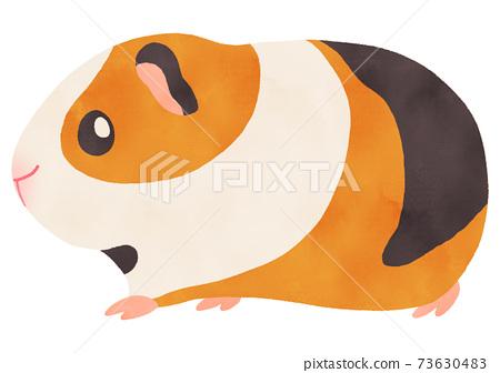 可愛的豚鼠水彩插圖側身,三根毛沒有主線 73630483