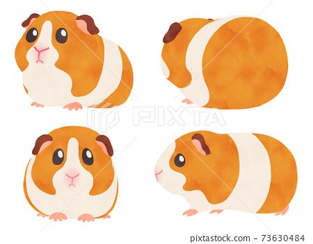 各種角度的豚鼠的水彩插圖集白色/棕色,沒有主線 73630484
