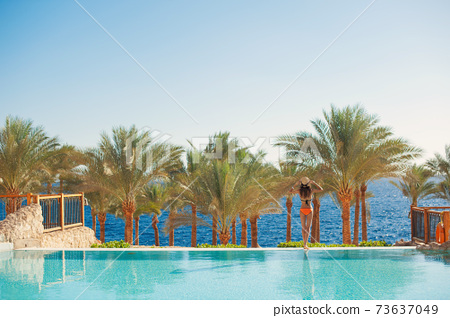 Woman stands on the summer pool looks at the sea against the backdrop of sunny palm trees travel in Egypt 73637049