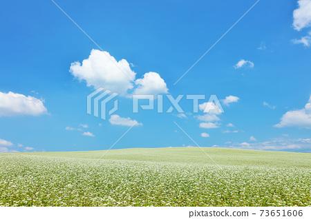홋카이도 여름 푸른 하늘과 메밀 밭의 풍경 73651606