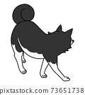 回望西伯利亞雪橇犬的背 73651738