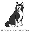 坐在你面前的藍眼睛的西伯利亞哈士奇犬 73651739