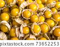 Fresh golden physalis goose berry  background. 73652253
