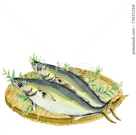 수채화 : 소쿠리에 올려 놓은 鰤 2 마리 만 해산물 소재 복사 공간가 흰색 배경 투명 73655269