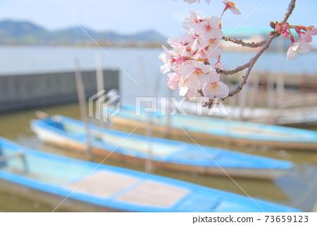岡山縣岡山市東區東區的染井吉野花開在春天的陽光和水邊 73659123