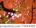 Autumn colored maple leaves 73664982