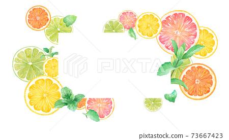 柑橘和薄荷的水彩插圖。框架設計的橙,檸檬,葡萄柚和石灰。 73667423