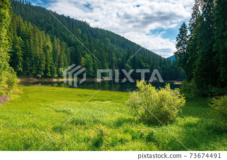 mountain lake landscape in summer. beautiful scenery of synevyr national park, ukraine. body of water among the forest. great view and amazing attarction of carpathian nature. travel europe concept 73674491