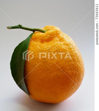 新鮮有機天然水果濟州哈拉邦,柑橘類水果 73683911