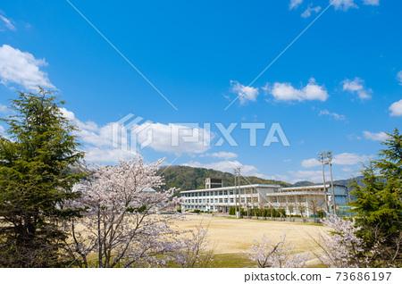 櫻花和學校春季入學圖片 73686197