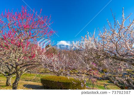 [靜岡縣]富士梅本山公園 73702387