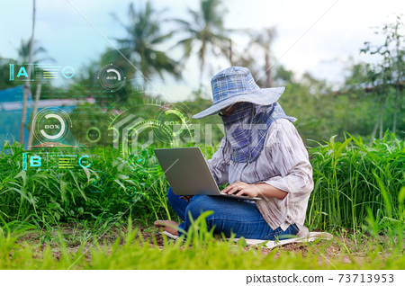 Thai farmer is using a laptop computer in a fresh morning glory vegetable farm, organic healthy food and technology concept, select focus shallow depth of field 73713953