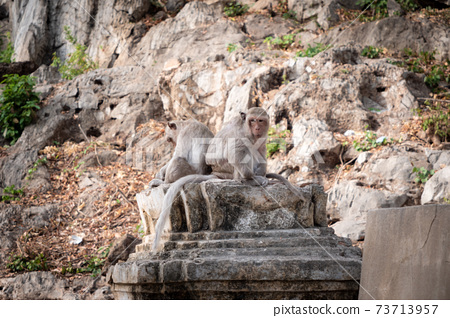 The monkey sitting at the nature place 73713957