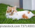 The cute Persian cat is sitting on a green grass field, selective focus shallow depth of field 73714603
