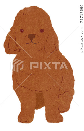 toy poodle 73717690