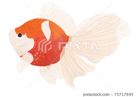 金魚 73717695