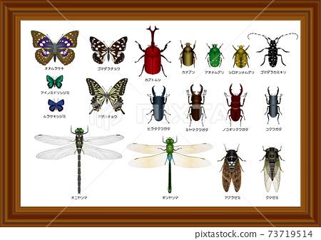 日本昆蟲標本 73719514