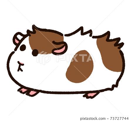 可愛的阿比西尼亞豚鼠 73727744